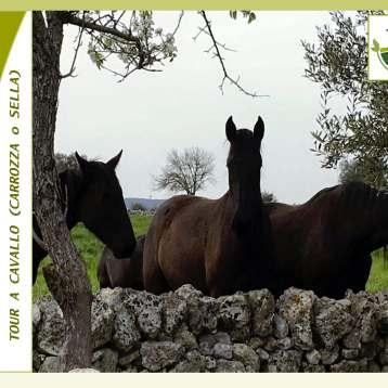 Tour Cavallo & Carrozza 1
